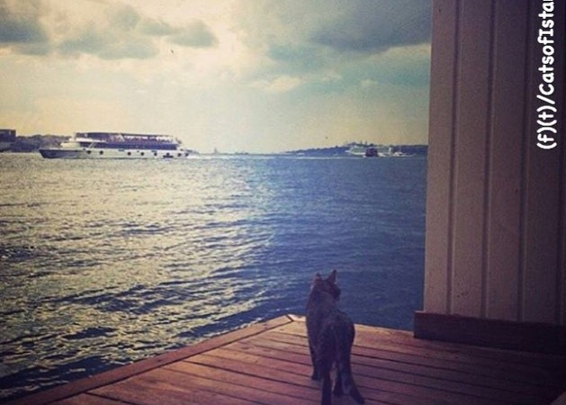 Cats of Istanbul 4