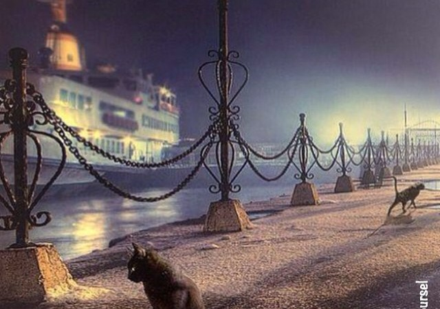 Cats of Istanbul 3