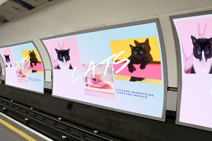 Cats, not ads