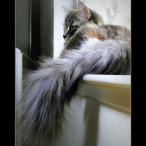 cat tail photo