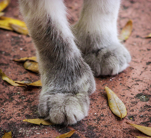 cat foot photo