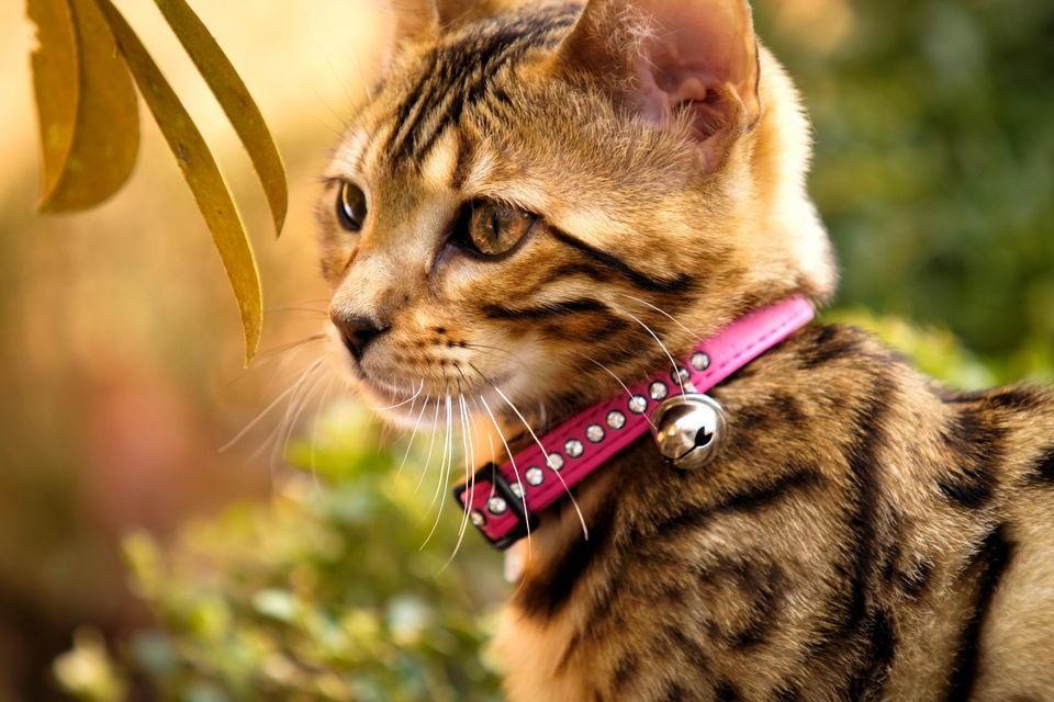 Zdrava mačka je sigurna mačka