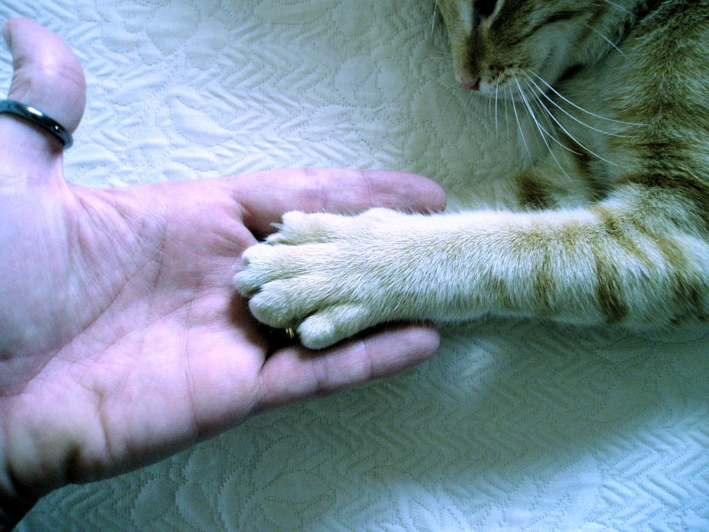 Žao nam je, ali vaša vas mačka ne voli!