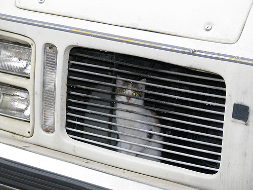 Mačka u motornom prostoru
