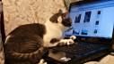 Mačke imaju aktivan život na društvenim mrežama