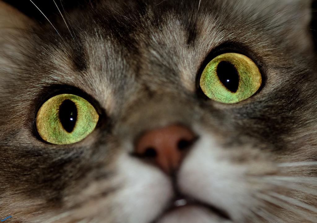 Svijet u bojama – mačke vide ultraljubičasto