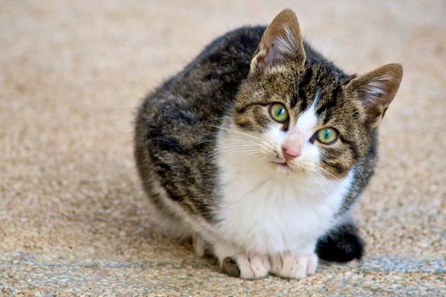 Zašto mačke predu?