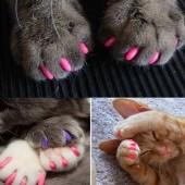 Kitty Caps umjetni nokti