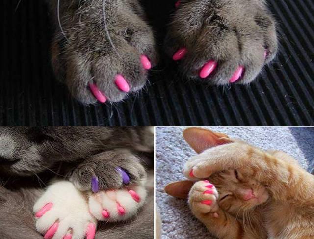 Hit – umjetni nokti za mačke!
