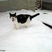 Mačka prognozer vremena?