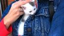 5 lekcija o roditeljstvu koje možemo naučiti od mačaka