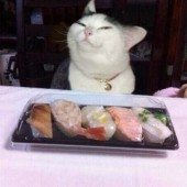 Je li netko za sushi?