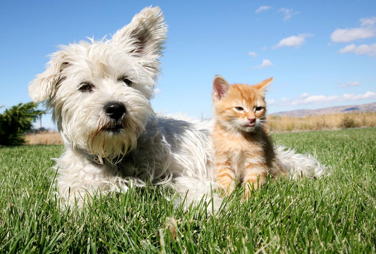 Istina o mačkama i psima