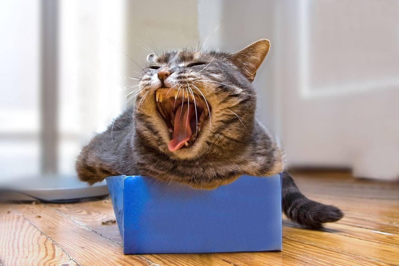 Mačka u kutiji