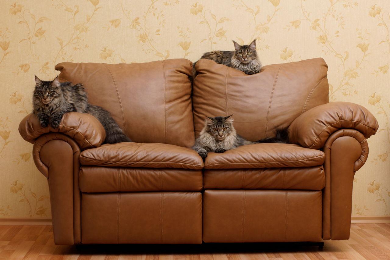 Kupite stan zajedno s – mačkom!
