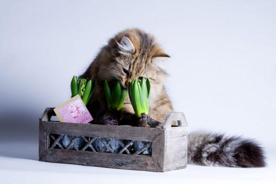 Mačka gricka biljku