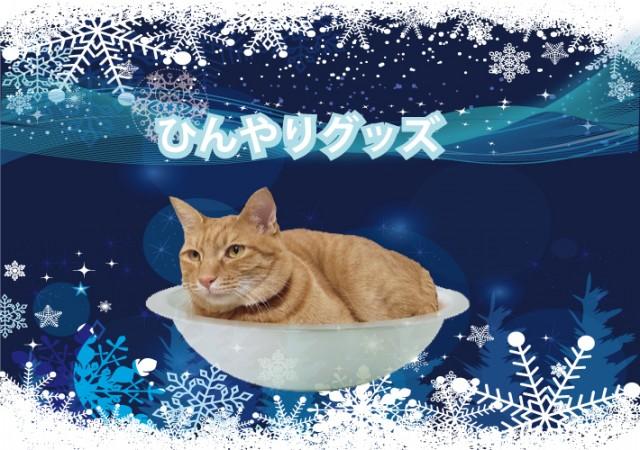 Novo – zdjelice za hlađenje mačaka