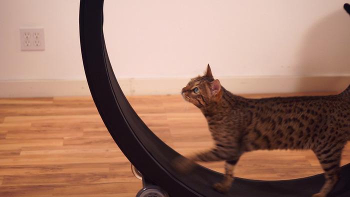 kotač za mačke