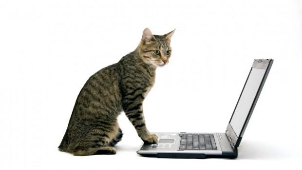 Poslovni potezi koje možemo naučiti od – mačaka