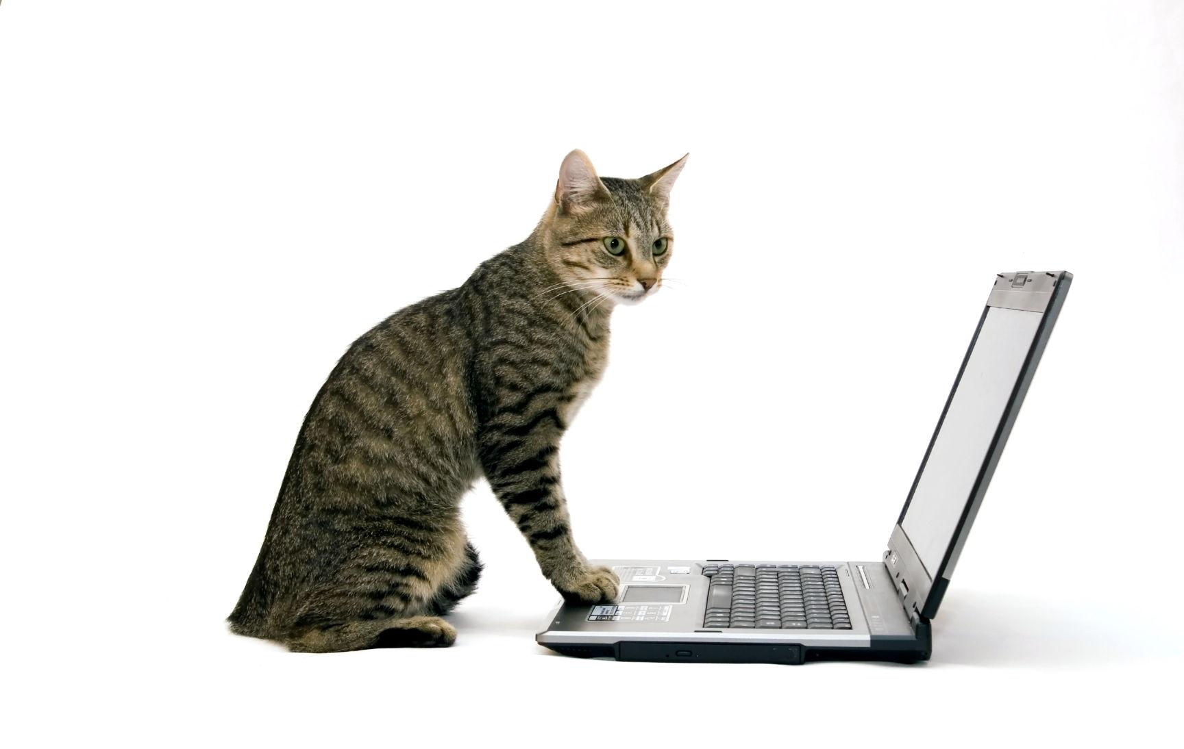 Poslovna mačka
