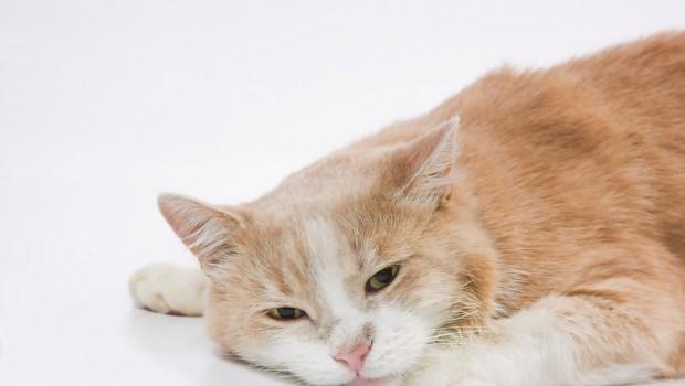 Prepoznajte kada vaša mačka tuguje
