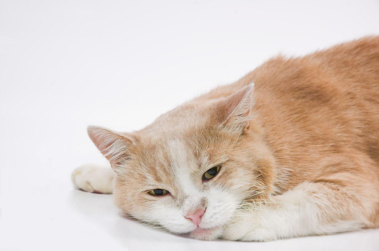 Tužna mačka