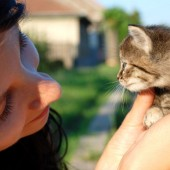 Dozrijevanje mačke