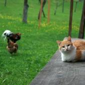 Ekologija i mačke