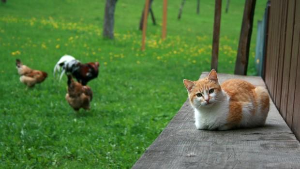 Budite ekološki osviješten ljubitelj mačaka