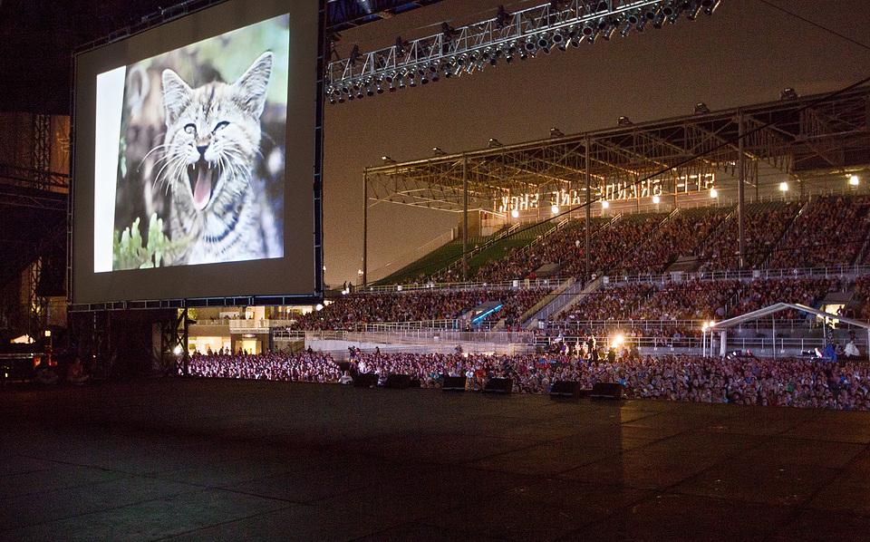 Dobrodošli na festival mačjeg filma!