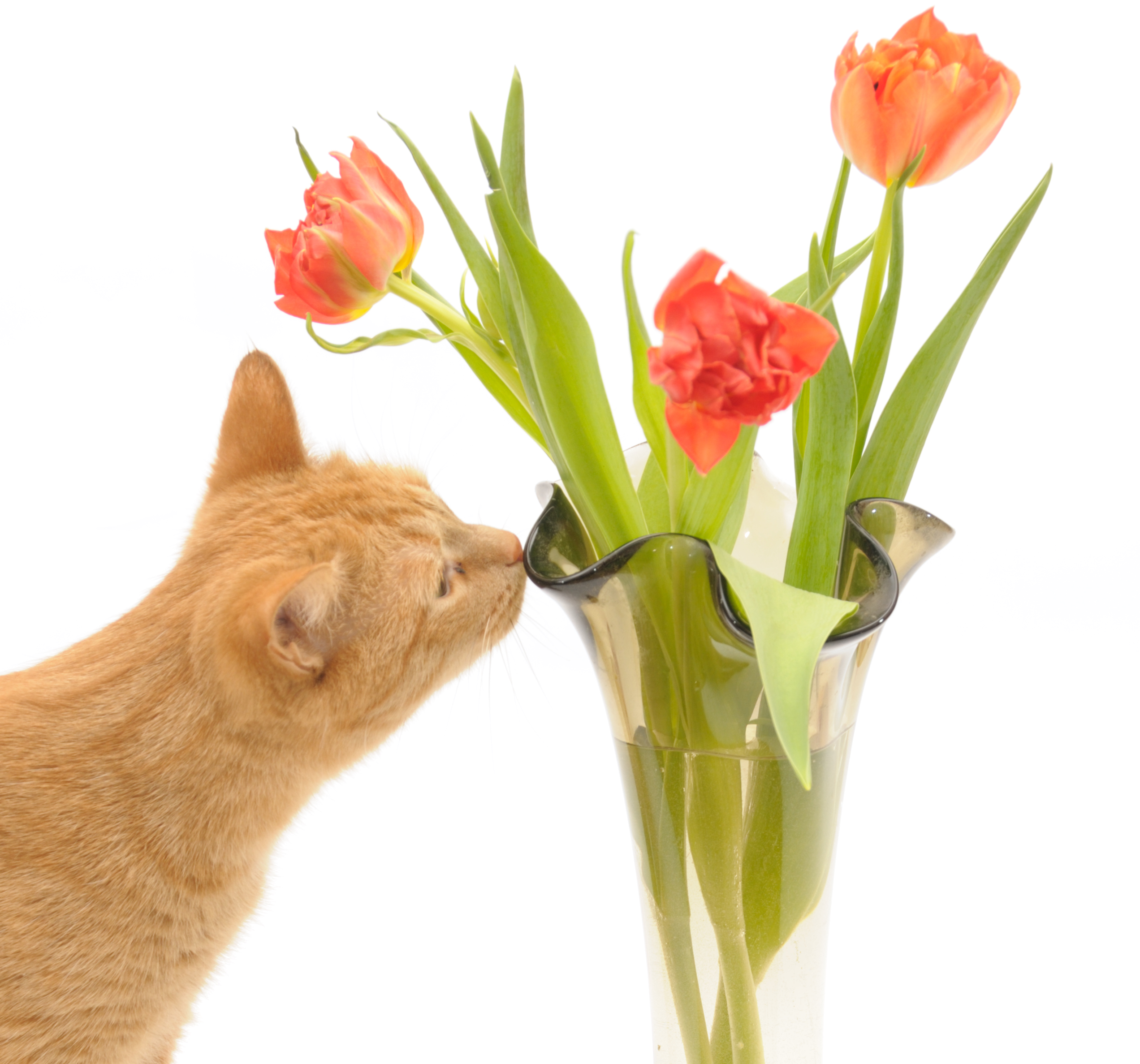 Otrovne sobne biljke – opasnost za vašu mačku