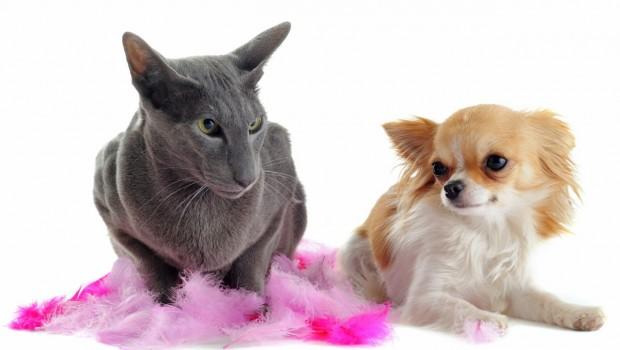 Mačke su pod stresom jer ih tretiramo poput pasa?