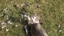Mačke ubiju više ptica nego vjetrenjače!