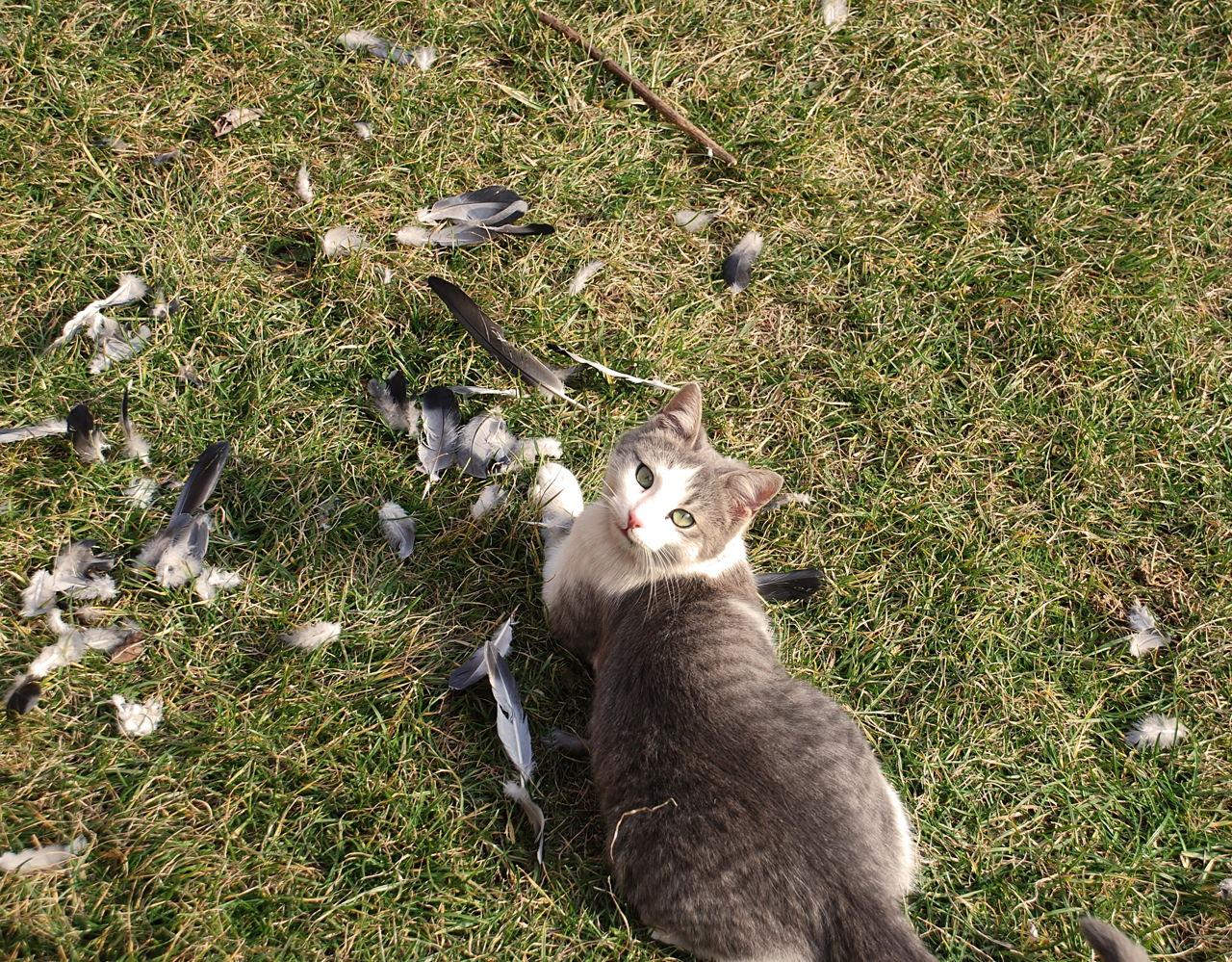 Mačka i ptica