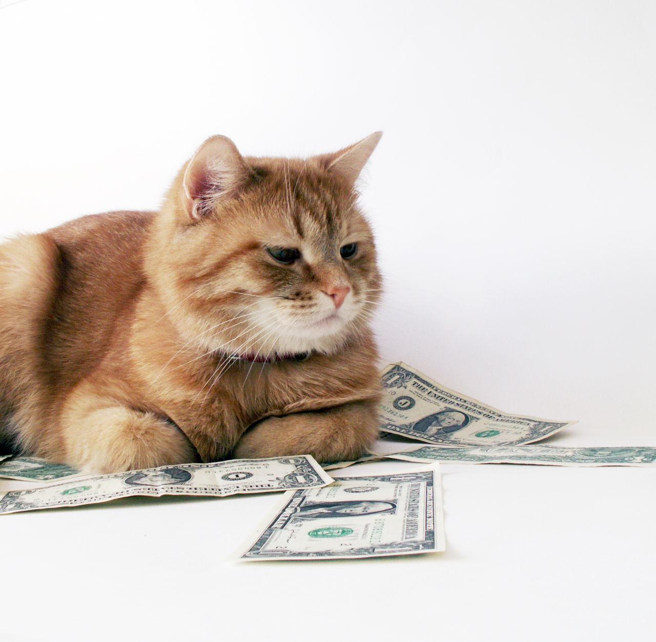 Mačke u poslovnom potezu najveće ruske banke