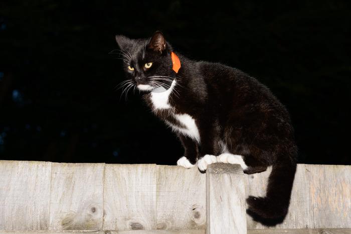 Pawtrack uređaj za praćenje mačke