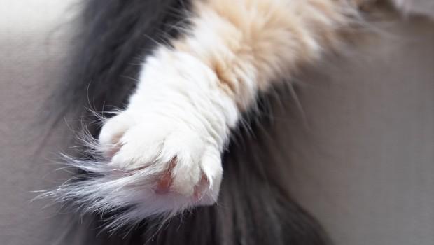 Kako podrezati nokte vašoj mački – i preživjeti!