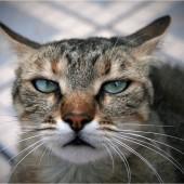 Mačka i devet života