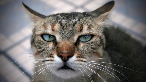 Zašto se kaže da mačke imaju 9 života?