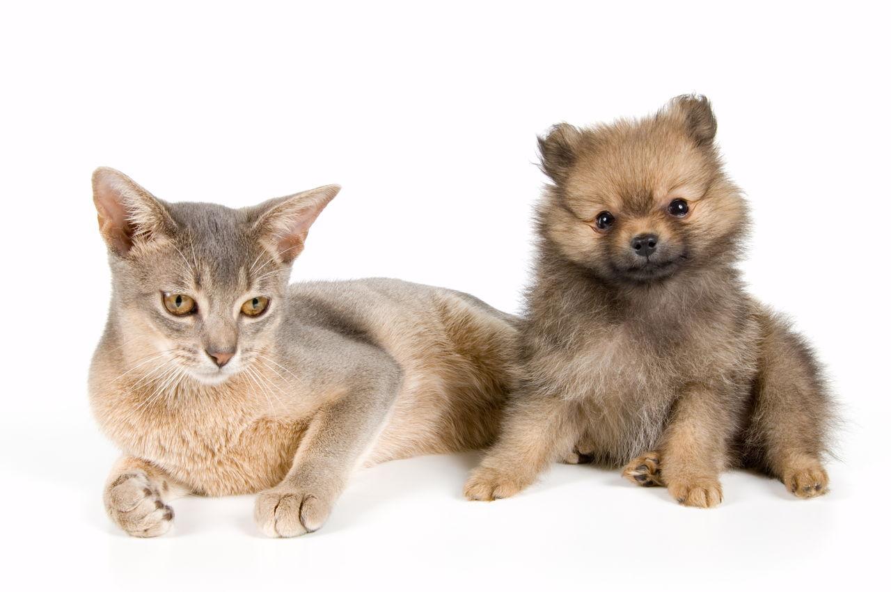 Transfuzija pseće krvi