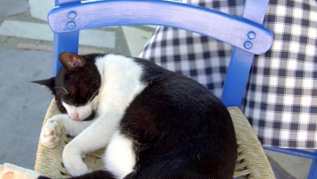 Tko je za antistres terapiju s mačkama neka digne ruku!