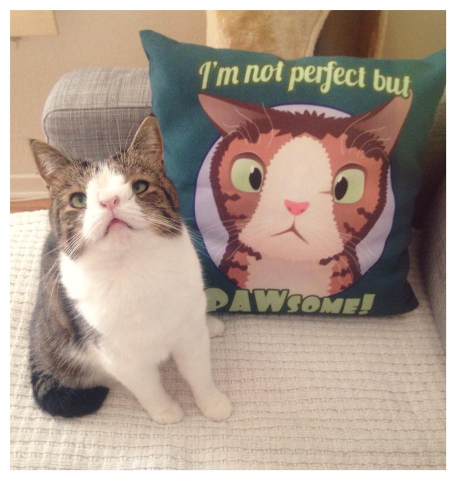 Upoznajte Montyja, mačka rođenog bez nosne kosti