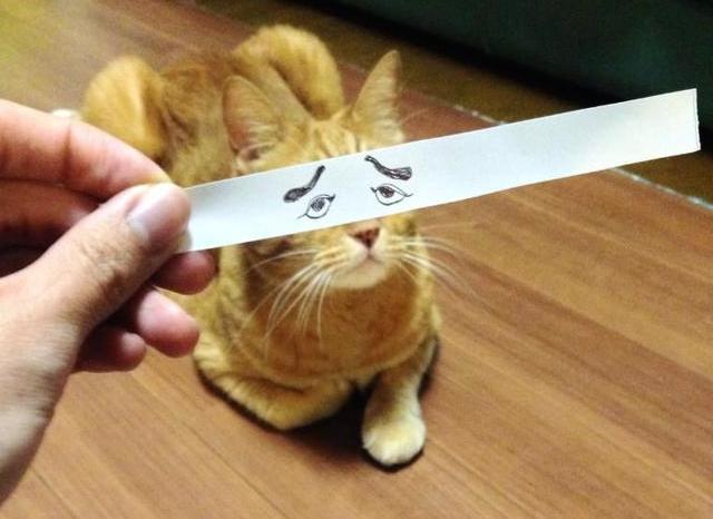 Mačke sa stripovskim očima