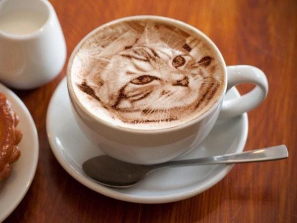 Mačka u šalici kave