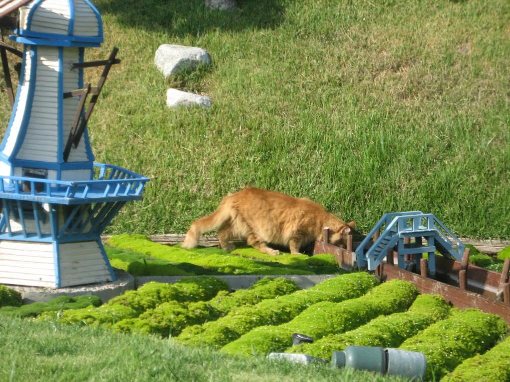 Mačke lutalice zabavnog parka Disneyland