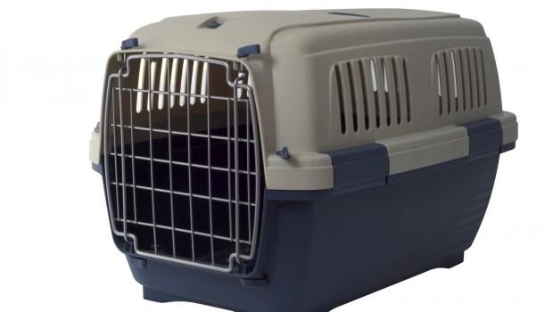 Olakšajte sebi i mački posjet veterinaru