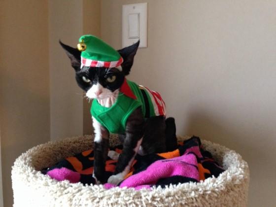 Blagdanska mačka 1