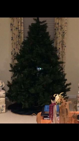 Blagdanska mačka 2