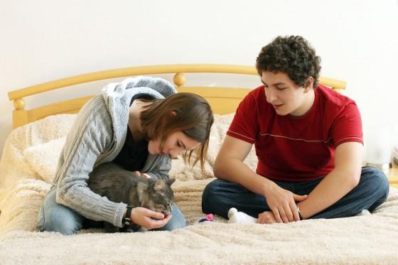 Svakodnevna interakcija s mačkom je neophodna