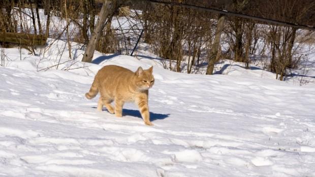 Antifriz – zimska opasnost za mačke